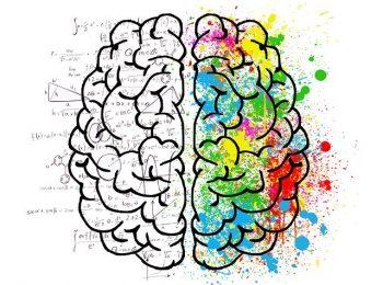 Les 8 formes d'intelligence